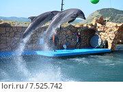 Купить «Анапский Утришский дельфинарий. Шоу морских млекопитающих», фото № 7525742, снято 6 июня 2015 г. (c) Игорь Архипов / Фотобанк Лори
