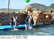 Купить «Анапский Утришский дельфинарий. Шоу морских млекопитающих.», фото № 7525746, снято 6 июня 2015 г. (c) Игорь Архипов / Фотобанк Лори