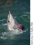 Купить «Анапский Утришский дельфинарий. Шоу морских млекопитающих», фото № 7525750, снято 6 июня 2015 г. (c) Игорь Архипов / Фотобанк Лори