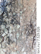 Купить «tree trunk bark texture», фото № 7529026, снято 9 февраля 2015 г. (c) Syda Productions / Фотобанк Лори