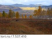 Купить «Осенний пейзаж. Забайкальский край», эксклюзивное фото № 7537410, снято 26 сентября 2007 г. (c) Александр Щепин / Фотобанк Лори