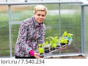 Позитивная женщина с рассадой огурцов стоит внутри теплицы, фото № 7540234, снято 14 июня 2014 г. (c) Евгений Ткачёв / Фотобанк Лори