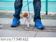 Купить «Щенок Джек рассела», фото № 7540622, снято 1 июня 2013 г. (c) Татьяна Кахилл / Фотобанк Лори