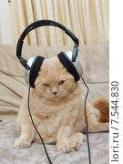 Купить «Рыжий кот сидит в наушниках», фото № 7544830, снято 19 мая 2015 г. (c) Андрей Пашков / Фотобанк Лори