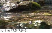 Купить «Лесной ручей, камни, блики. Пущино. Отъезд», видеоролик № 7547946, снято 16 июля 2020 г. (c) Mike The / Фотобанк Лори