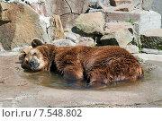 Купить «Медведь в зоопарке лежит в воде, охлаждается в летний жаркий день», эксклюзивное фото № 7548802, снято 13 июня 2015 г. (c) Svet / Фотобанк Лори