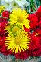 Желтые ромашки, фото № 7550198, снято 12 мая 2015 г. (c) Nikolay Sukhorukov / Фотобанк Лори