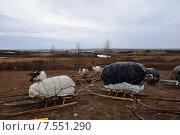 Купить «После аргиша в летнем стойбище оленеводов», фото № 7551290, снято 14 апреля 2013 г. (c) Николай Новиков / Фотобанк Лори