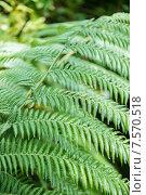 Купить «Close up of fern leaves», фото № 7570518, снято 2 августа 2014 г. (c) Elnur / Фотобанк Лори