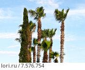 Пальмы и кипарисы. Стоковое фото, фотограф Екатерина Пономарева / Фотобанк Лори
