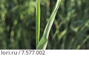 Купить «Зеленая травинка», видеоролик № 7577002, снято 18 июня 2015 г. (c) Потийко Сергей / Фотобанк Лори