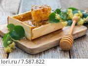 Купить «Мед в сотах и цветы липы», фото № 7587822, снято 21 июня 2015 г. (c) Марина Сапрунова / Фотобанк Лори