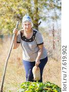 Пожилая женщина в огороде. Стоковое фото, фотограф Евгений Чернецов / Фотобанк Лори