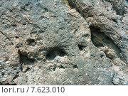 Купить «Стена, фон, текстура из скальной породы», фото № 7623010, снято 8 июня 2014 г. (c) виктор химич / Фотобанк Лори