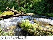 Купить «Горная река Great Estyube, Алтай», фото № 7642518, снято 4 августа 2014 г. (c) Александр Карпенко / Фотобанк Лори