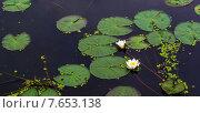 Лилии. Стоковое фото, фотограф Vladimir Veseliy / Фотобанк Лори