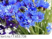 Купить «Васильки», эксклюзивное фото № 7653738, снято 19 июня 2015 г. (c) Яна Королёва / Фотобанк Лори