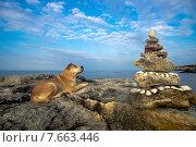 Купить «Собака лежит на берегу моря возле пирамиды из камней», фото № 7663446, снято 18 мая 2015 г. (c) Алексей Маринченко / Фотобанк Лори
