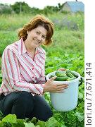 Купить «Женщина собирает урожай в огороде на даче», фото № 7671414, снято 13 июля 2015 г. (c) Володина Ольга / Фотобанк Лори
