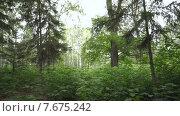Лес. Стоковое видео, видеограф Рамиль Бакиров / Фотобанк Лори