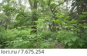 Летний лес. Стоковое видео, видеограф Рамиль Бакиров / Фотобанк Лори