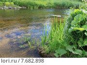 Заросли у реки. Стоковое фото, фотограф Татьяна Иванова / Фотобанк Лори