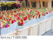 Купить «Продажа тюльпанов на голландском рынке», фото № 7689586, снято 17 января 2015 г. (c) Николай Кокарев / Фотобанк Лори