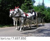 Купить «Белая карета с белыми лошадьми в Абрамцево. Сергиево-Посадский район Московской области», эксклюзивное фото № 7697850, снято 13 июня 2015 г. (c) lana1501 / Фотобанк Лори