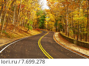 Купить «Autumn scene with road in forest», фото № 7699278, снято 17 октября 2014 г. (c) Николай Охитин / Фотобанк Лори