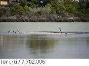 Купить «Water sea ocean bird rest», фото № 7702006, снято 25 марта 2019 г. (c) PantherMedia / Фотобанк Лори