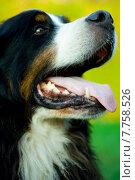 Купить «nature green animal dog tongue», фото № 7758526, снято 15 сентября 2019 г. (c) PantherMedia / Фотобанк Лори
