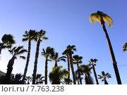 Купить «green spain palm tree licht», фото № 7763238, снято 20 февраля 2019 г. (c) PantherMedia / Фотобанк Лори