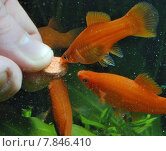 red water hand fish finger. Стоковое фото, фотограф Dirk Dümpelmann / PantherMedia / Фотобанк Лори