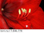 Купить «red plant flower leaf leaves», фото № 7846778, снято 18 октября 2018 г. (c) PantherMedia / Фотобанк Лори