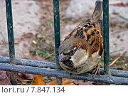 Купить «animal brown brunette bird grey», фото № 7847134, снято 16 июля 2019 г. (c) PantherMedia / Фотобанк Лори