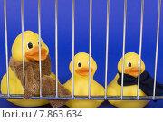 Купить «blue yellow protection toy danger», фото № 7863634, снято 16 июля 2019 г. (c) PantherMedia / Фотобанк Лори