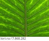 green tree leaf structure leaves. Стоковое фото, фотограф Viola Böhme / PantherMedia / Фотобанк Лори