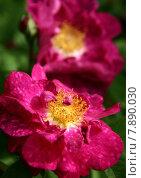 Купить «plant love flower garden flowers», фото № 7890030, снято 23 апреля 2019 г. (c) PantherMedia / Фотобанк Лори