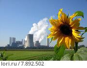 Купить «plant flower power energy electricity», фото № 7892502, снято 19 декабря 2018 г. (c) PantherMedia / Фотобанк Лори