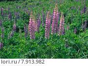 Купить «plant flower flowers plants wild», фото № 7913982, снято 22 октября 2019 г. (c) PantherMedia / Фотобанк Лори