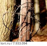 Купить «close up brown tree macro», фото № 7933094, снято 23 марта 2019 г. (c) PantherMedia / Фотобанк Лори