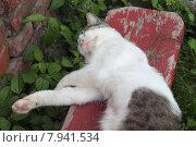 Купить «Кошечка сладко спит на скамейке, вытянув белые лапки», эксклюзивное фото № 7941534, снято 15 июля 2015 г. (c) Ирина Водяник / Фотобанк Лори