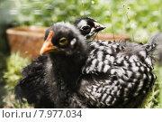 Купить «green animal spring grass pet», фото № 7977034, снято 16 июля 2019 г. (c) PantherMedia / Фотобанк Лори