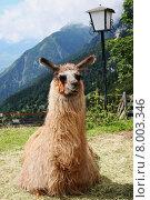 Купить «mountain pet mountains nose lantern», фото № 8003346, снято 30 мая 2020 г. (c) PantherMedia / Фотобанк Лори