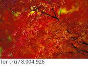 Купить «background red brown yellow tree», фото № 8004926, снято 16 июня 2019 г. (c) PantherMedia / Фотобанк Лори