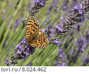 Купить «blue animal purple wing insect», фото № 8024462, снято 25 марта 2019 г. (c) PantherMedia / Фотобанк Лори