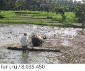 Купить «water plant rice cultivation farmer», фото № 8035450, снято 21 мая 2018 г. (c) PantherMedia / Фотобанк Лори