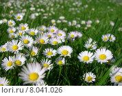 Купить «green plant flower grass flowers», фото № 8041026, снято 16 июня 2019 г. (c) PantherMedia / Фотобанк Лори