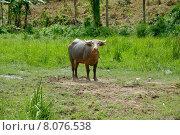 Купить «nature scenery countryside idyllic vast», фото № 8076538, снято 21 мая 2018 г. (c) PantherMedia / Фотобанк Лори