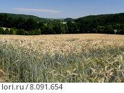Купить «blue sky field agriculture forest», фото № 8091654, снято 23 августа 2019 г. (c) PantherMedia / Фотобанк Лори